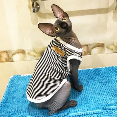 Summer Cat Clothes Cotton Striped Vest Pet Cats T Shirt Clothing For Cat Outfit Shirt Pet Clothes Cute Kitten Puppy Costume 25S2